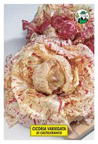 variegata di Castelfranco