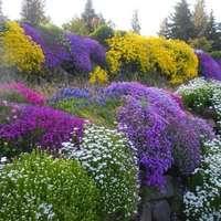 miscuglio per giardini rocciosi