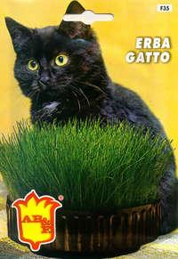 erba gatto
