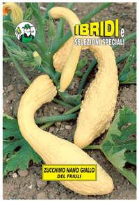 zucchino nano giallo
