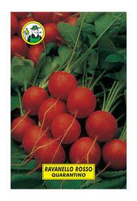 ravanello rosso quarantino