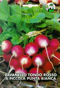 ravanello tondo rosso a piccola punta bianca