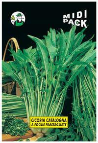cicoria catalogna a foglie frastagliate