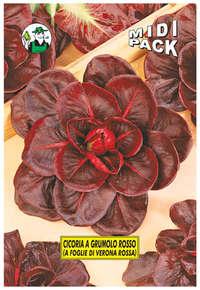 cicoria a grumolo rosso (a foglie di Verona rossa)