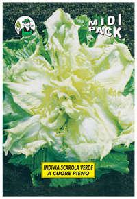indivia scarola verde