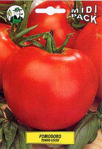 pomodoro tondo Ace