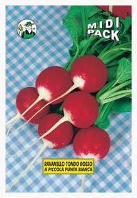 ravanello tondo rosso a punta bianca