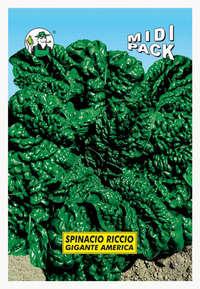 spinacio riccio gigante d'America