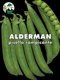 pisello Alderman rampicante