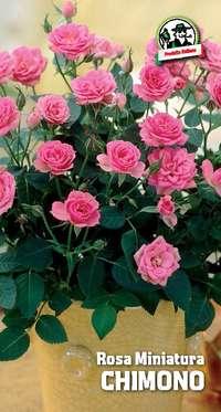 rosa miniatura Chimono