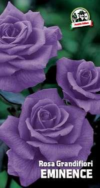 rosa grandifiori Eminence