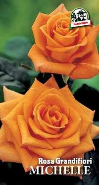 rosa grandifiori Monica o Michelle