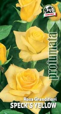 rosa grandifiori Speck's Yellow